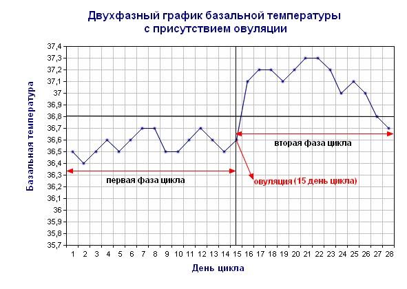 базальная температура перед менструацией
